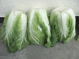 ベーコン鍋用白菜02.JPG